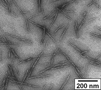 Transmission electron microscope image of cellulose nanocrystals. Robert Moon, USDA Forest Service