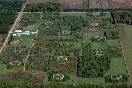 Photo of Aerial view of the Aspen FACE experiment showing the control facilities (middle left), and the 12 atmospheric treatment rings of four treatments with three replicates.  In the ring at bottom center, the different model forest communities are visible. David F. Karnosky, Michigan Tech University.