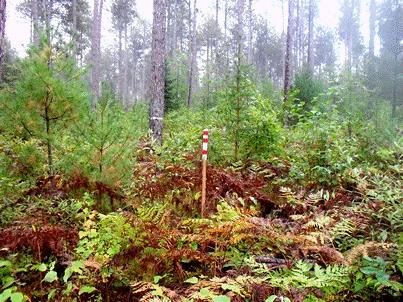 A Structurally Complex And Diverse Red Pine Forest Christel Kern Usda Service