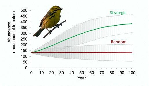 Photo of Models indicate strategically placed habitat restoration is effective at reversing declines of Prairie Warblers whereas randomly placed management is not. Wolfgang Wander, Wikimedia Commons.