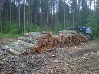 Photo of Hardwood logs at a harvest site in northern Wisconsin. Bumgardner, Matthew, USDA Forest Service