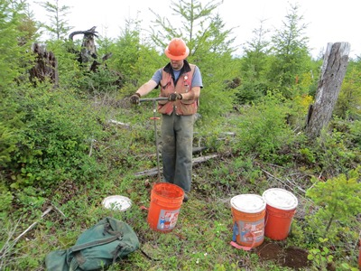 Photo of A researcher collects a soil sample that will be analyzed to determine how retention of logging debris affects nutrient levels. Tim Harrington, USDA Forest Service