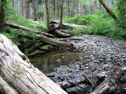 Photo of Salmon habitat in the Olympic Experimental State Forest, Washington. Pete Bisson, USDA Forest Service