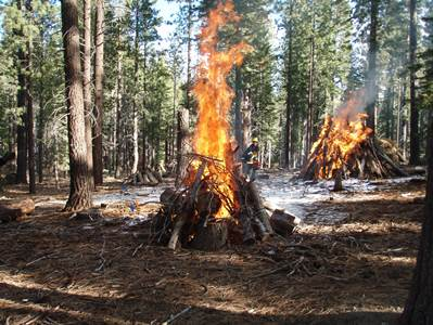 Photo of Burn piles in the Lake Tahoe Basin. Carol Shestak,  Matt Busse, USDA Forest Service