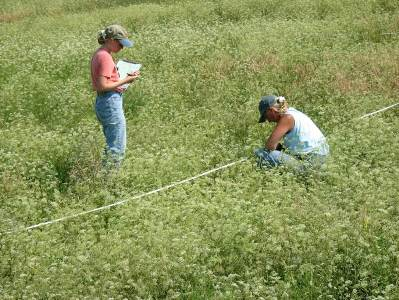 Photo of Forest Service researchers investigate the factors that contribute to the expansion of a recently introduced plant species into a native prairie. USDA Forest Service