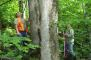 Photo of Forest Service researchers measure a tree in an old-growth stand in The Bowl Research Natural Area in New Hampshire. Coeli Hoover, USDA Forest Service