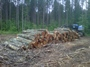 Hardwood logs at a harvest site in northern Wisconsin. Bumgardner, Matthew, USDA Forest Service
