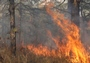 Photo of A March 2013 prescribed fire burning at the Cedar Bridge carbon flux tower in the New Jersey Pinelands. Recovery following prescribed fires is rapid, and stands can replace released carbon within 2-3 years. Kenneth Clark, USDA Forest Service