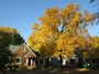 Walnut tree in suburban neighborhood, St. Paul, MN. Robert G. Haight, USDA Forest Service