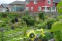 Photo of A community garden in the Seattle metro area. Kathy Wolf, USDA Forest Service