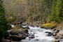Photo of The Blue River in H.J. Andrews Experimental Forest, Oregon. Tom Iraci, USDA Forest Service