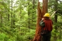 Photo of A Forest Service technician measures a snag in Alaska as part of the National Forest Inventory and Analysis Program. Jon Williams, USDA Forest Service