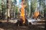 Photo of Burn piles in the Lake Tahoe Basin. Carol Shestak,  Matt Busse, USDA Forest Service