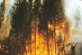 Picture of Mappint Project Delivers Fire Severity Maps for all Phases of Fire Management
