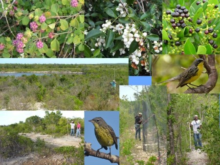 Photo of Bottom two photos: Left photo shows student intern Scott Johnson and project field directorJennifer White at a goat farm site (11 years after clearing) where the Kirtland's Warblers were abundant. Right photo shows a female Kirtland's Warbler.
