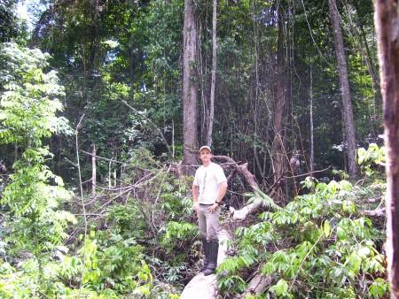 Photo of A view of a multiple tree mortality event in the Tapajos National Forest near Santarem, in the Brazilian Amazon. Fernando Espirito-Santo, NASA Jet Propulsion Laboratory