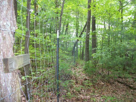 Photo of An example of typical understory conditions in the Summer of 2008 on one of the fenced subplots on the Monongahela National Forest. Melissa Thomas-Van Gundy, USDA Forest Service