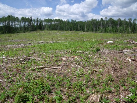 Photo of Harvest for woody biofuels. Anthony D'Amato, University of Minnesota