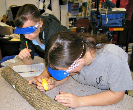 Photo of Dempsey Middle School science students paint and dissect ash logs to understand woodpecker feeding on emerald ash borer larvae. Joanne Rebbeck, USDA Forest Service