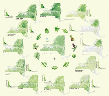Photo of These maps depict the distribution of 12 tree species across the state of New York. The maps show where these trees do not occur (gray), occasionally occur (pale green), are a minor component (medium green), are a major component (dark green), or are the dominant species (black) in the forest, as determined by that species' total basal area. Rachel Riemann, USDA Forest Service