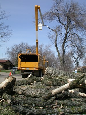 Photo of Contractors remove trees infested by emerald ash borer, Shields, MI, 2004. David Cappaert, Michigan State University
