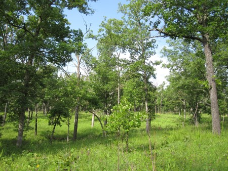 Photo of Oak savanna and woodlands are being restored through the use of prescribed fire and tree thinning and provide habitat for many birds of conservation concern. Jennifer Reidy, University of Missouri