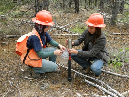 Photo of Researchers collect soil samples to learn what mycorrhizal fungi are present in this stand of lodgepole pine on the Deschutes National Forest. Jane E. Smith, USDA Forest Service