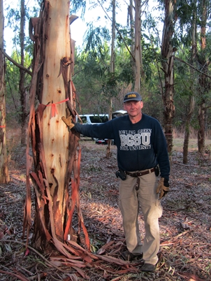 Photo of Forest Service employee Robert Eaton stands beside an eight year old Eucalyptus benthamii growing near Ravenel, S.C. Chris Maier,  USDA Forest Service