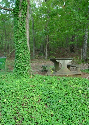 Photo of English ivy is a common invasive woody climbing plant. David J. Moorehead, University of Georgia