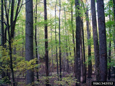 Photo of Deciduous forest. Chris Evans, Illinois Wildlife Action Plan