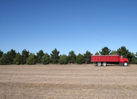 Photo of An image of an established windbreak on a farm in Colorado. USDA Forest Service