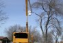 Picture of Municipal Cooperation in Managing Emerald Ash Borer Increases Urban Forest Benefits