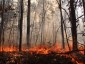 Photo of A prescribed fire burning in the New Jersey Pinelands.  Recovery following prescribed fires is rapid, and over a ten-year period burned stands sequestered twice the amount of carbon compared to stands defoliated by invasive insects. Michael Gallagher, USDA Forest Service