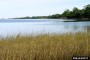 Photo of Scenic coast with marsh grass. Billy Humphries, Forest Resource Consultants, Inc.
