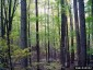 Photo of Deciduous forest. Chris Evans, Illinois Wildlife Action Plan