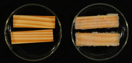 Photo of Sequential vacuum treatment of southern pine with naturally occurring cellulose nanocrystals followed by biocide demonstrated penetration of wood before agglomeration occurred (left), but reversing the treatment sequence resulted in agglomeration  on the surface of southern pine (right). USDA Forest Service