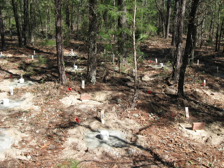 Photo of Completed efficacy trial plots on the Chipola Experimental Forest. USDA Forest Service