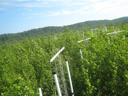 Sweetgum plantation at Oak Ridge National Laboratory Free-Air CO2 Enrichment study site. Jeffrey M. Warren, Oak Ridge National Laboratory