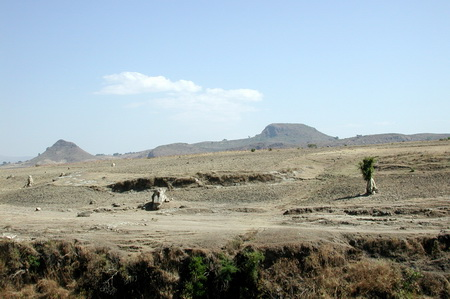 Photo of This fossil forest in Ethiopia once had a very different climate. John Kappelman, University of Texas