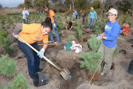 Photo of Million Trees NYC Volunteers in Action City of New York / NYC Parks - NYC Parks