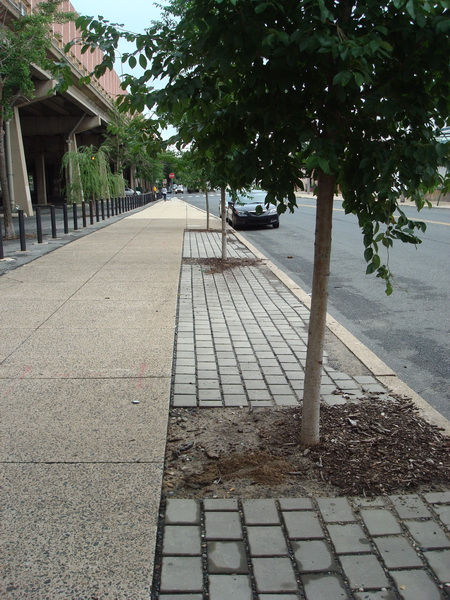 Photo of Stormwater tree trench and pervious pavers. USDA Forest Service