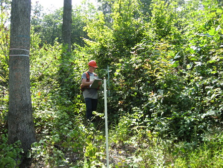 Photo of Tree regeneration 5 years after herciide treatment and shelterwood harvest. USDA Forest Service.