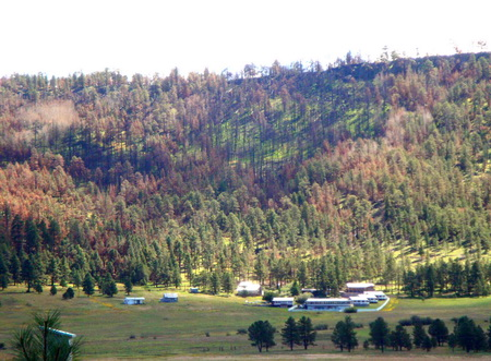 Photo of Trees burned along a hillside at the edge of the 2011 Wallow Fire. Sarah McCaffrey, USDA Forest Service.
