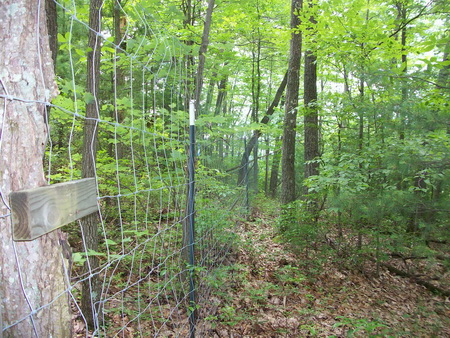 Photo of Fence line of one of the plots with canopy gaps.  The vegetation is noticeably taller and denser inside the fence as compared to outside the fence. USDA Forest Service