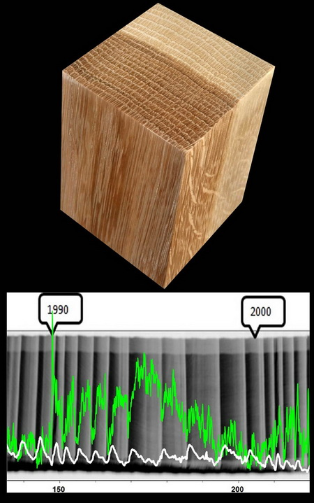 Photo of Tree rings or growth increments as in this block or red oak provide a dynamic record of internal biology and environmental change (upper image). High-resolution chemical analysis of this poplar show within-year and annual trends in calcium (white line) and chlorine (green line) lower image) superimposed of an X-ray showing within-year changes in wood density. USDA Forest Service