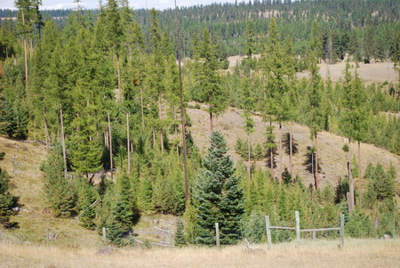 Photo of A study site at the Starkey Experimental Forest and Range that was thinned and then fenced to exclude ungulate herbivory. USDA Forest Service