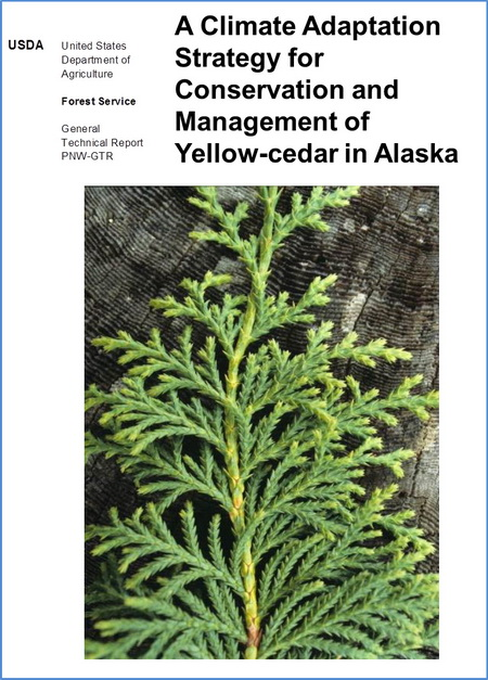 Photo of This report summarizes current knowledge on yellow-cedar and offers opportunities to adapt conservation and management of yellow-cedar in Alaska. USDA Forest Service