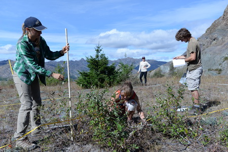 Photo of Field crew with the Pacific Northwest Research Station sample willow shrubs on the Pumice Plain of Mount St. Helens. Pyroclastic flows during the 1980 eruption removed all traces of the old-growth forest here, about four miles north of the volcano. USDA Forest Service