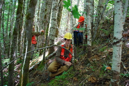 Photo of Field crew measure trees at H.J. Andrews Experimental Forest. USDA Forest Service