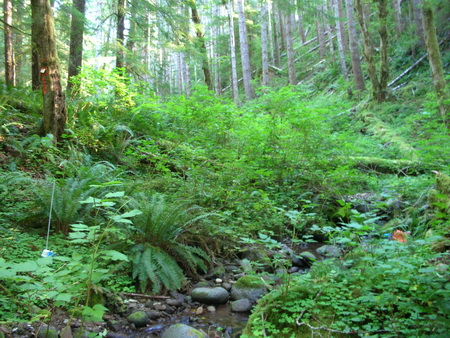 Photo of A headwater stream in western Oregon. USDA Forest Service